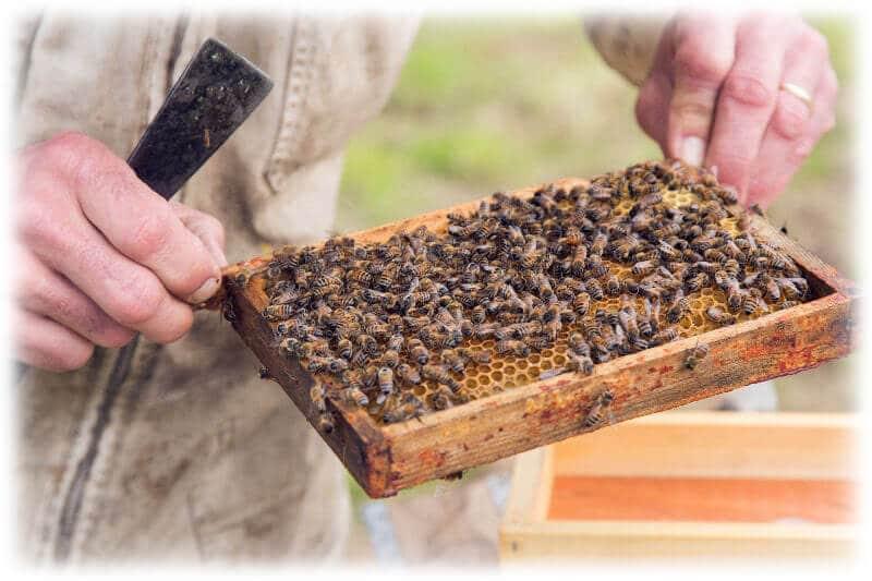 rucherserdre-casson-miel12